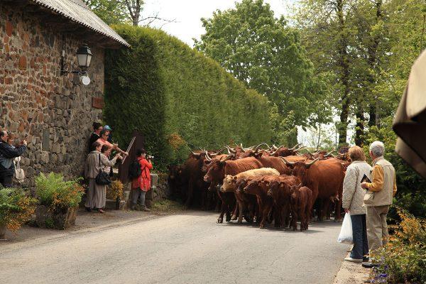 11-Fête des fromages à Pailherols